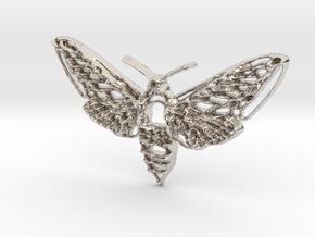 Hawkmoth in Platinum