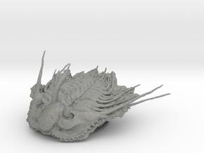 Trilobite - Kettneraspis prescheri in Gray PA12