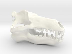 Andrewsarchus Articulated Skull in White Processed Versatile Plastic
