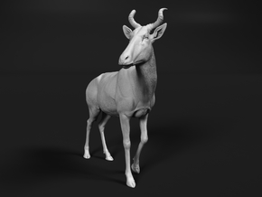Bubal Hartebeest 1:16 Walking Male in White Natural Versatile Plastic