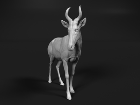 Western hartebeest 1:9 Standing Male in White Natural Versatile Plastic