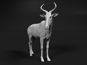 Swayne's Hartebeest 1:25 Standing Male in White Natural Versatile Plastic