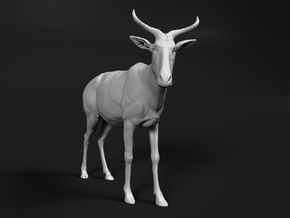 Tora Hartebeest 1:6 Standing Male in White Natural Versatile Plastic
