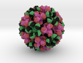 Human Norovirus GII.4 Strain in Natural Full Color Sandstone