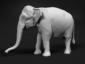 Indian Elephant 1:25 Standing Female 1 in White Natural Versatile Plastic