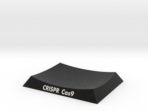 CRISPR Cas9 Base in Natural Full Color Sandstone: Extra Small