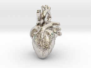Anatomical Heart Pendant in Platinum
