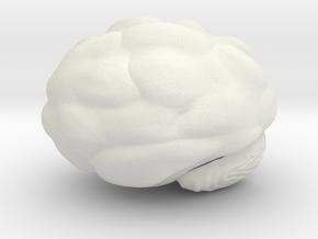 Cute Brain in White Natural Versatile Plastic: Large