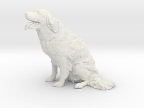Drentsche Patrijshond Nienke in White Natural Versatile Plastic