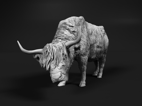 Highland Cattle 1:64 Female with the head down in Smooth Fine Detail Plastic