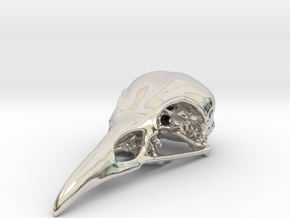 Bird Skull - Micro in Platinum