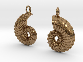 Nautilus Shell Earrings in Natural Brass