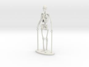 1-35 Scale Standing Skeleton in White Natural Versatile Plastic
