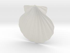 Scallop Shell in White Natural Versatile Plastic