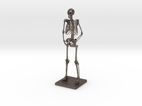 "6"" Desktop Skeleton in Polished Bronzed Silver Steel"