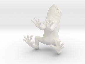 frog 2cm in White Natural Versatile Plastic