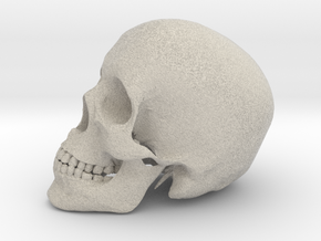 Detailed Human Skull (Life sized) in Natural Sandstone