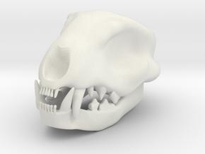 Cat Skull 2 Inch in White Natural Versatile Plastic