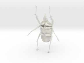 Goliath Beetle solid filigree - 10cm in White Natural Versatile Plastic