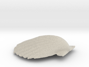 Scallop Shell in Natural Sandstone