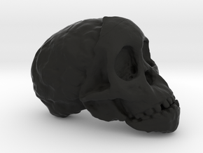 RadioLab Taung Child Skull Via Shootdigital 2014.0 in Black Natural Versatile Plastic