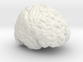 Life Size Brain from MRI in White Natural Versatile Plastic