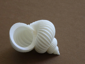 hoover rufflestratus shell - seashell in White Strong & Flexible