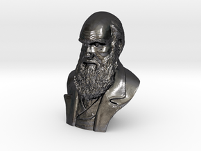 "Charles Darwin 16"" Bust in Polished Grey Steel"