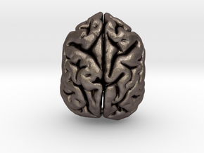 Sloth Bear Brain in Polished Bronzed Silver Steel