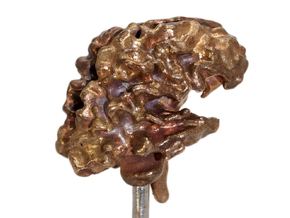 Brain White Matter in Raw Bronze