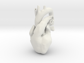 Ultra-Realistic Heart by 3DGEOM in White Natural Versatile Plastic