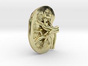 Anatomical Kidney Pendant in 18K Gold Plated