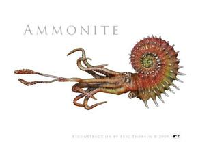 Ammonite 7cm in White Strong & Flexible