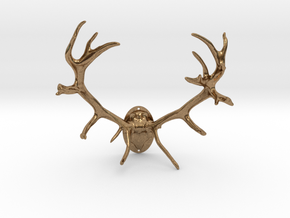 Red Deer Antler Mount 40mm in Natural Brass