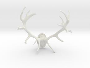 Red Deer Antler Mount - 50mm in White Natural Versatile Plastic