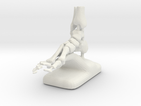 Large Scale Podiatry/Orthopedic Bones of Foot Mode in White Natural Versatile Plastic