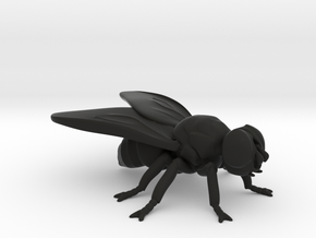 Fly  in Black Natural Versatile Plastic