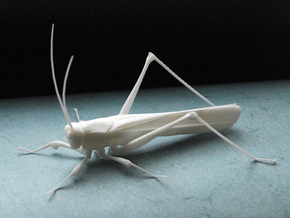 Articulated Katydid in White Natural Versatile Plastic