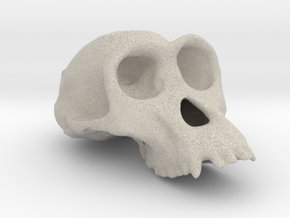 Chimpanzee ♀ cranium in Natural Sandstone