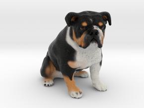 Custom Dog Figurine - Wilbur in Full Color Sandstone