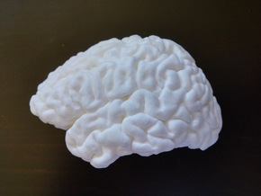 The left hemisphere of the brain - half scale in White Strong & Flexible Polished