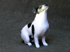 Howling Jack Russell Terrier in Full Color Sandstone