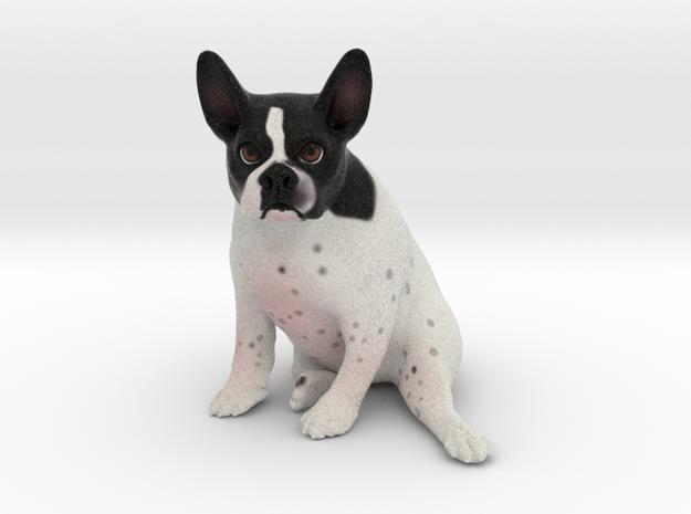 Custom Dog Figurine - Pocky in Full Color Sandstone