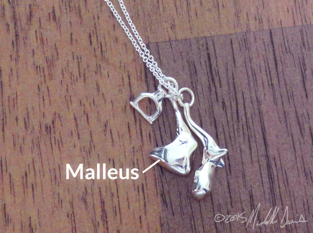 Ossicle Pendant - Malleus (right sided) in Polished Silver