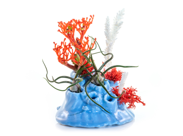 Barnacled Scallop Planter in Gloss Blue Porcelain
