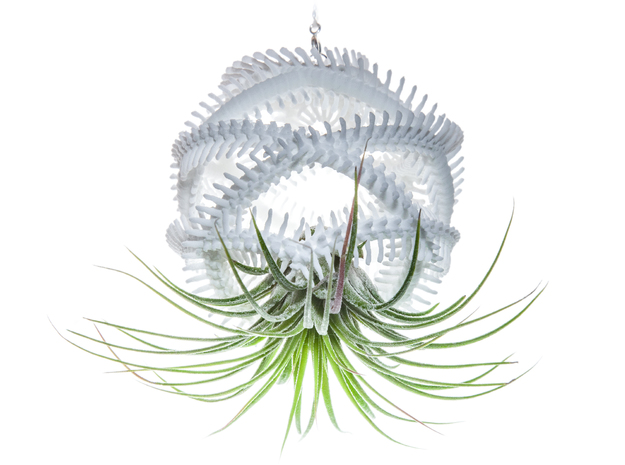 Radiolaria Vertebralia Planter in White Strong & Flexible