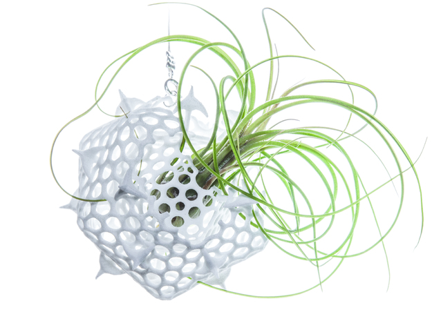 Radiolaria Platonica Planter in White Natural Versatile Plastic