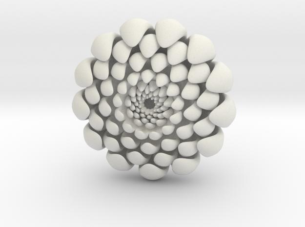 chrysanthemum -kiku-