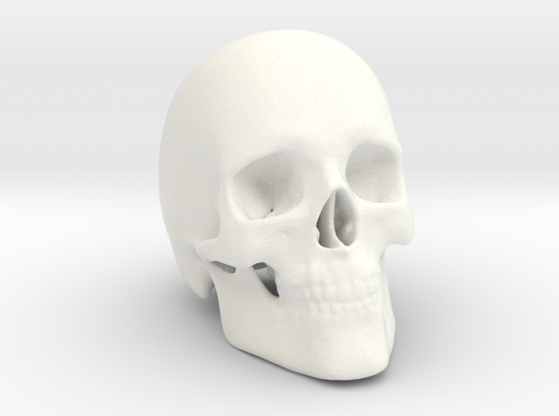 Human Skull in White Strong & Flexible Polished