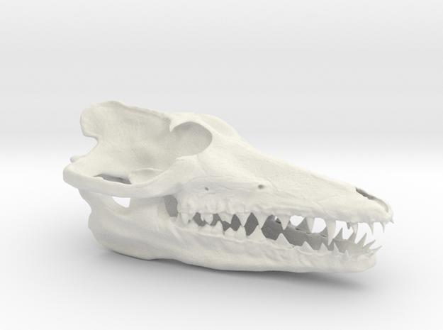 Pakicetus skull half size in White Natural Versatile Plastic